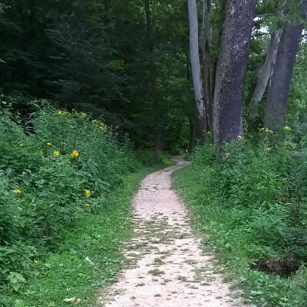 northeast ohio woods trail path neodruwid druwid